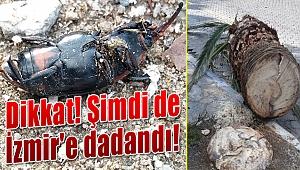 Dikkat! O böcek İzmir'e dadandı
