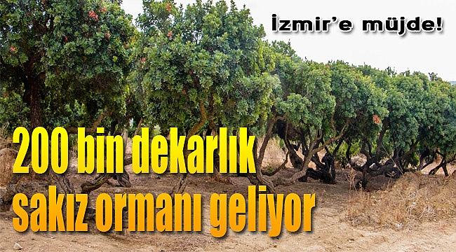 İzmir'e müjde! 200 bin dekarlık orman geliyor...