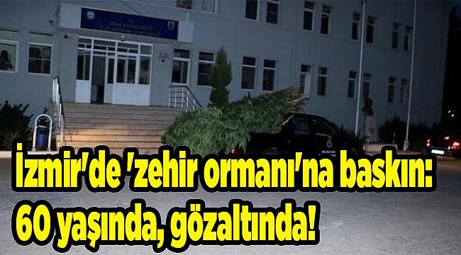 İzmir'de 'zehir ormanı'na baskın: 60 yaşında, gözaltında!
