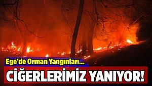 Ege'nin farklı noktalarında orman yangınları...