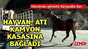 İzmir'de bir hayvan atını kamyon kasasına bağladı!