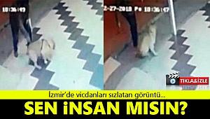 İzmir'de köpeğe sopa ile saldırı