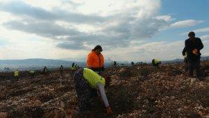 İzmir'in yeni orman alanı nakış gibi işleniyor