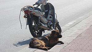 Köpeği motosiklete bağlayıp sürüklediler