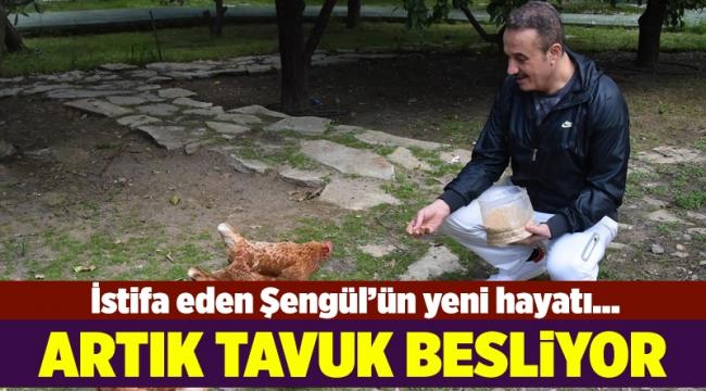 AK Partili Şengül'ün yeni hayatı; Tavuk besliyor
