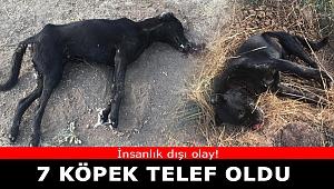 İzmir'de zehirlenen 7 köpek telef oldu