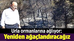 Urla ormanlarına ağlıyor: Yeniden ağaçlandıracağız