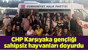 CHP Karşıyaka gençliği sahipsiz hayvanları doyurdu