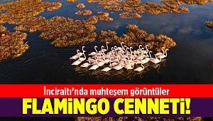 İnciraltı'ndan flamingo manzaraları...
