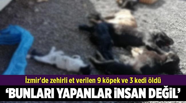 İzmir'de zehirli et verilen 9 köpek ve 3 kedi öldü