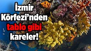 İzmir Körfezi'nden tablo gibi kareler!