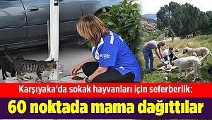 Karşıyaka'da sokak hayvanları için seferberlik: 60 noktada mama dağıttılar