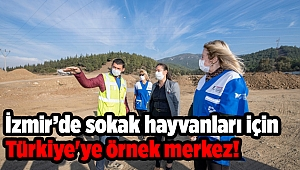 İzmir'de sokak hayvanları için Türkiye'ye örnek merkez!
