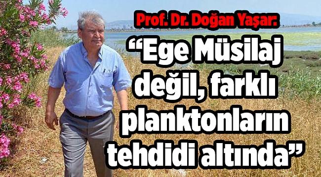 PROF. DR. YAŞAR: EGE MÜSİLAJ DEĞİL, FARKLI PLANKTON TÜRLERİNİN TEHDİDİ ALTINDA